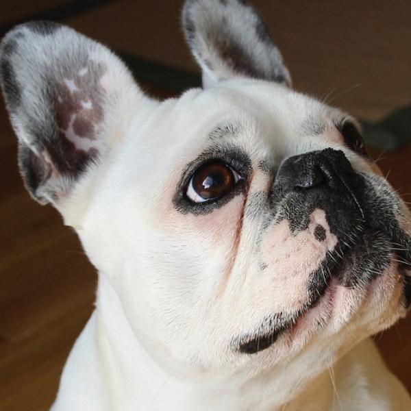Conge adoption animal compagnie 1